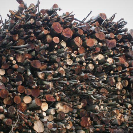 legnolocalepinerolese-legna5