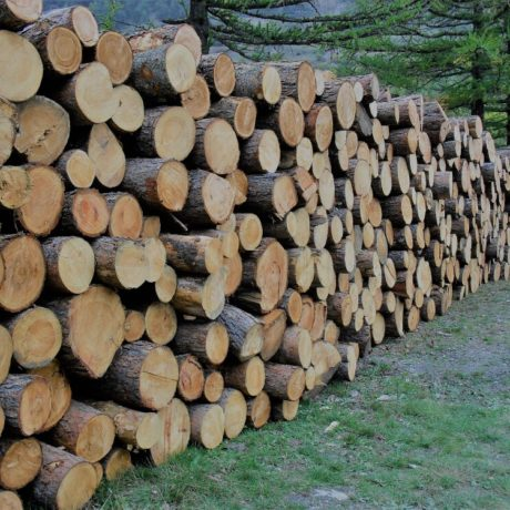 legnolocalepinerolese-tondo 2