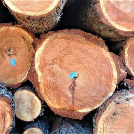 legnolocalepinerolese-tondo3