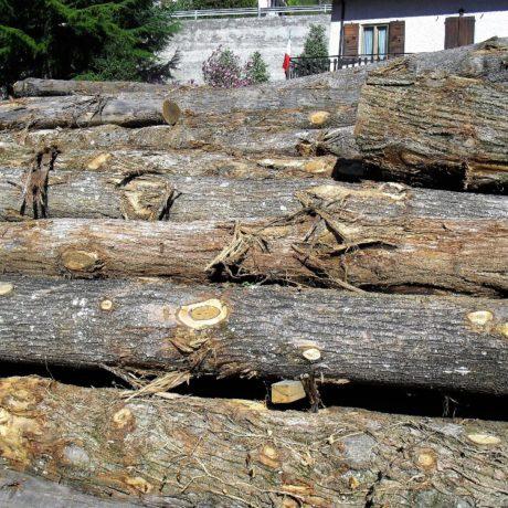 legnolocalepinerolese-tondo4